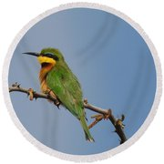 Round Beach Towel featuring the photograph Little Bee-eater by Betty-Anne McDonald
