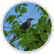 Little Bird In The Tree  Round Beach Towel