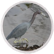 Round Beach Towel featuring the photograph Little Blue Heron Walking by Christiane Schulze Art And Photography
