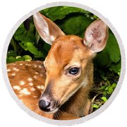 Round Beach Towel featuring the photograph Little Fawn by Adam Olsen