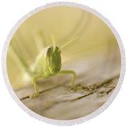 Little Grasshopper Round Beach Towel