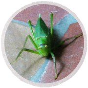 Round Beach Towel featuring the photograph Little Grasshopper by Denise Fulmer