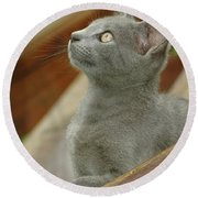 Little Gray Kitty Cat Round Beach Towel