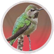 Little Hummer Round Beach Towel
