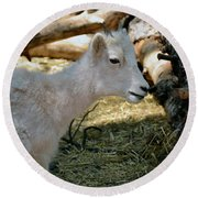 Round Beach Towel featuring the photograph Little Kid by Debby Pueschel