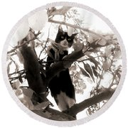 Little Kitty Round Beach Towel