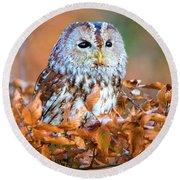 Little Owl Round Beach Towel
