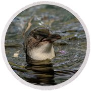 Little Penguin In The Water Round Beach Towel