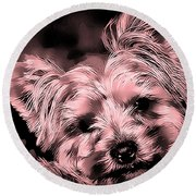 Round Beach Towel featuring the photograph Little Powder Puff by Kathy Tarochione