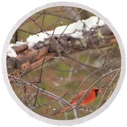 Little Red Bird Round Beach Towel by Evelina Popilian