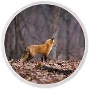 Little Red Fox Round Beach Towel