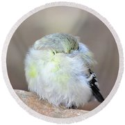 Little Sleeping Goldfinch Round Beach Towel