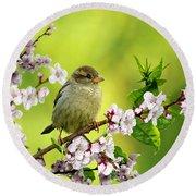 Little Sparrow Round Beach Towel