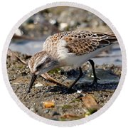Little Western Sandpiper Round Beach Towel
