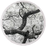 Live Oak Abstract 1 Round Beach Towel