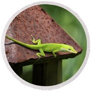 Lizard On Lantern Round Beach Towel