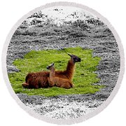 Llamas At Ingapirca Round Beach Towel