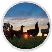 Llamas At Sunset Round Beach Towel
