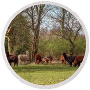 Round Beach Towel featuring the photograph Alpacas In Scotland by Jeremy Lavender Photography