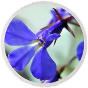 Round Beach Towel featuring the photograph Lobelia Erinus by Terence Davis
