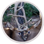 Locking Horns - Well Antlers Round Beach Towel