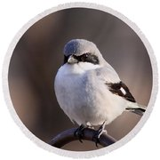 Loggerhead Shrike - Smokey Round Beach Towel