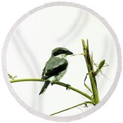 Round Beach Towel featuring the photograph Loggerhead Shrike And Mantis by Robert Frederick