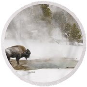Bison Keeping Warm Round Beach Towel