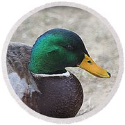 Round Beach Towel featuring the photograph Lone Mallard Duck by Kathy White