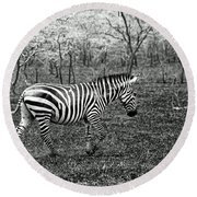 Lone Zebra Round Beach Towel by Michael Cinnamond