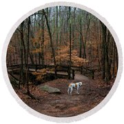 Lonely Hound Round Beach Towel by Barbara Bowen