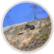 Round Beach Towel featuring the photograph Lonely Leopard by Al Powell Photography USA