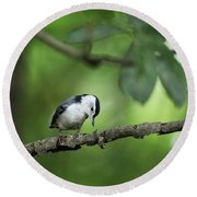 Lonely Nuthatch Round Beach Towel