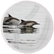 Long Beaked Common Dolphin With Calf Round Beach Towel