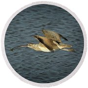 Long-billed Curlew In Flight Round Beach Towel