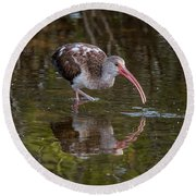 Long-billed Curlew - Male Round Beach Towel