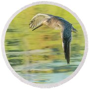 Long-billed Dowitcher 4799-091917-1cr Round Beach Towel