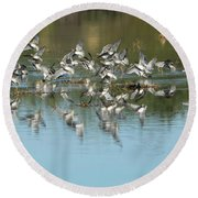 Round Beach Towel featuring the photograph Long-billed Dowitchers by Tam Ryan