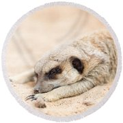 Long Day In Meerkat Village Round Beach Towel