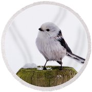 Round Beach Towel featuring the photograph Long-tailed Tit On The Pole by Torbjorn Swenelius