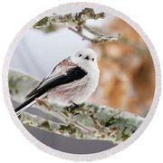 Long-tailed Tit Round Beach Towel by Torbjorn Swenelius