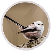 Round Beach Towel featuring the photograph Long-tailed Tit Wag The Tail by Torbjorn Swenelius