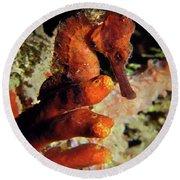 Longsnout Seahorse, St. Croix, U.s. Virgin Islands 2 Round Beach Towel
