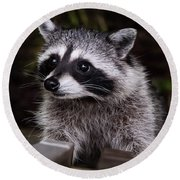 Round Beach Towel featuring the photograph Look Who Came For Dinner by Jordan Blackstone