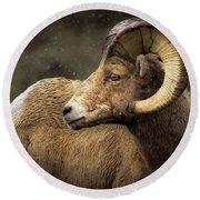 Looking Back - Bighorn Sheep Round Beach Towel