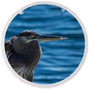 Looking For Lunch Round Beach Towel by Marvin Spates