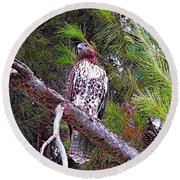 Looking For Prey - Red Tailed Hawk Round Beach Towel