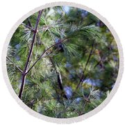 Looking Through The Pine Needles Round Beach Towel