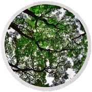 Looking Up The Oaks Round Beach Towel