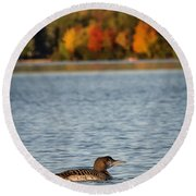 Loon Chick Round Beach Towel